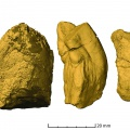 Beetle-bearing coprolites from the Late Triassic of Poland